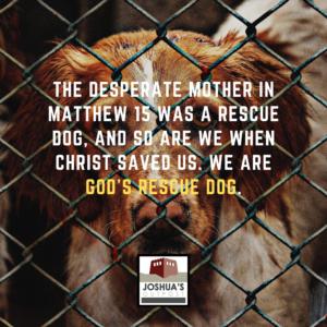 God's Rescue Dog